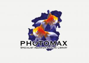 PhotoMax